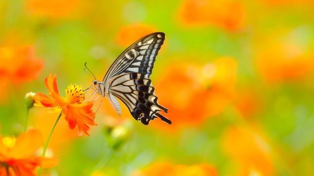 jardim borboleta