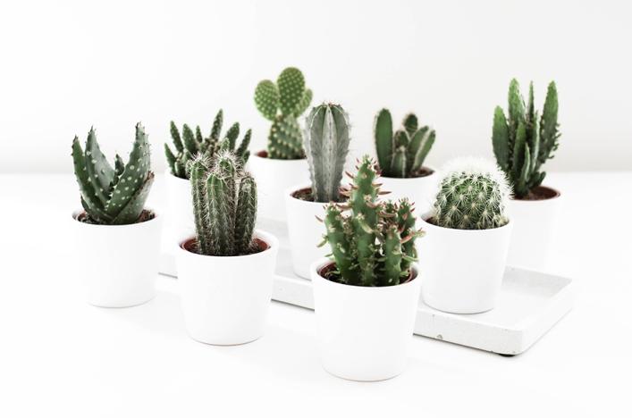 noa-noir-art-interior-home-decor-cactus-cacti-succulents-green-mini-plants-minimalistic-2